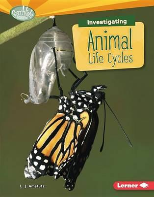 Image for Investigating Animal Life Cycles: Searchlight Books What Are Earth's Cycles?