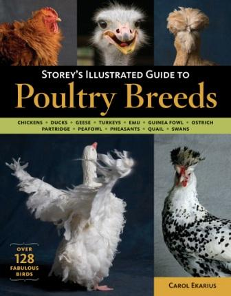 Image for Storey's Illustrated Guide to Poultry Breeds