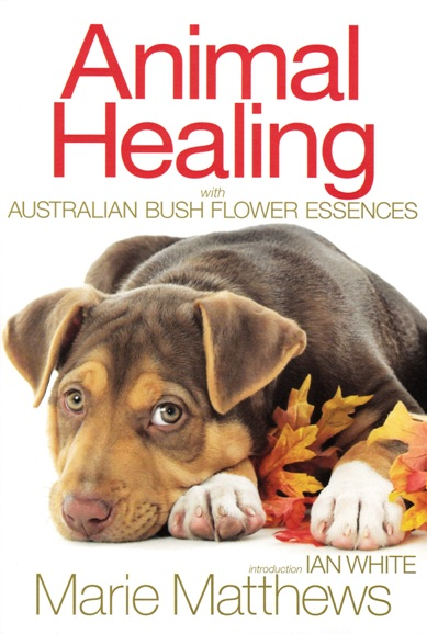 Image for Animal Healing with Australian Bush Flower Essences