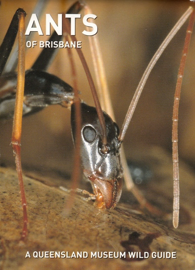 Image for Ants of Brisbane: A Queensland Museum Pocket Wild Guide