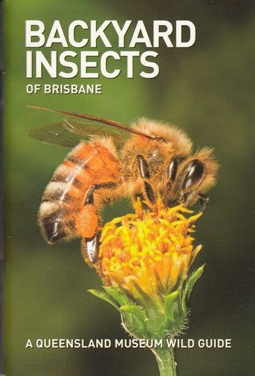 Image for Backyard Insects of Brisbane: A Queensland Museum Pocket Wild Guide
