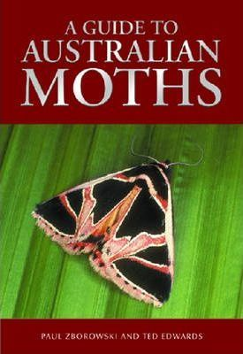 Image for A Guide to Australian Moths