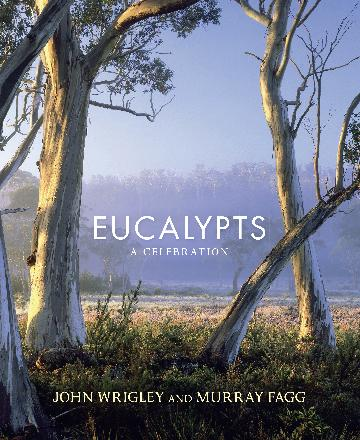Image for Eucalypts : A Celebration