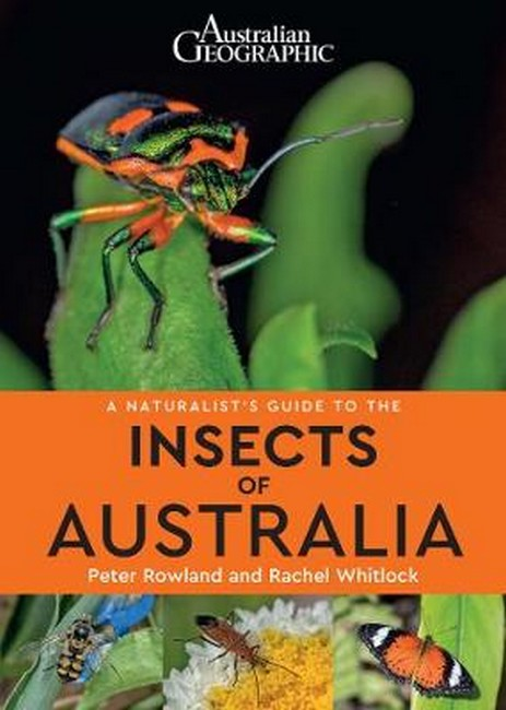 Image for Australian Geographic : A Naturalist's Guide to the Insects of Australia
