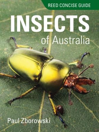 Image for Reed Concise Guide : Insects of Australia